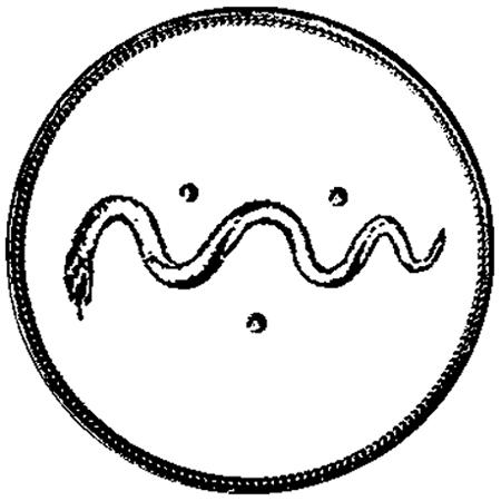 monogram-mvg-web-450px